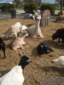 Petting Zoo200